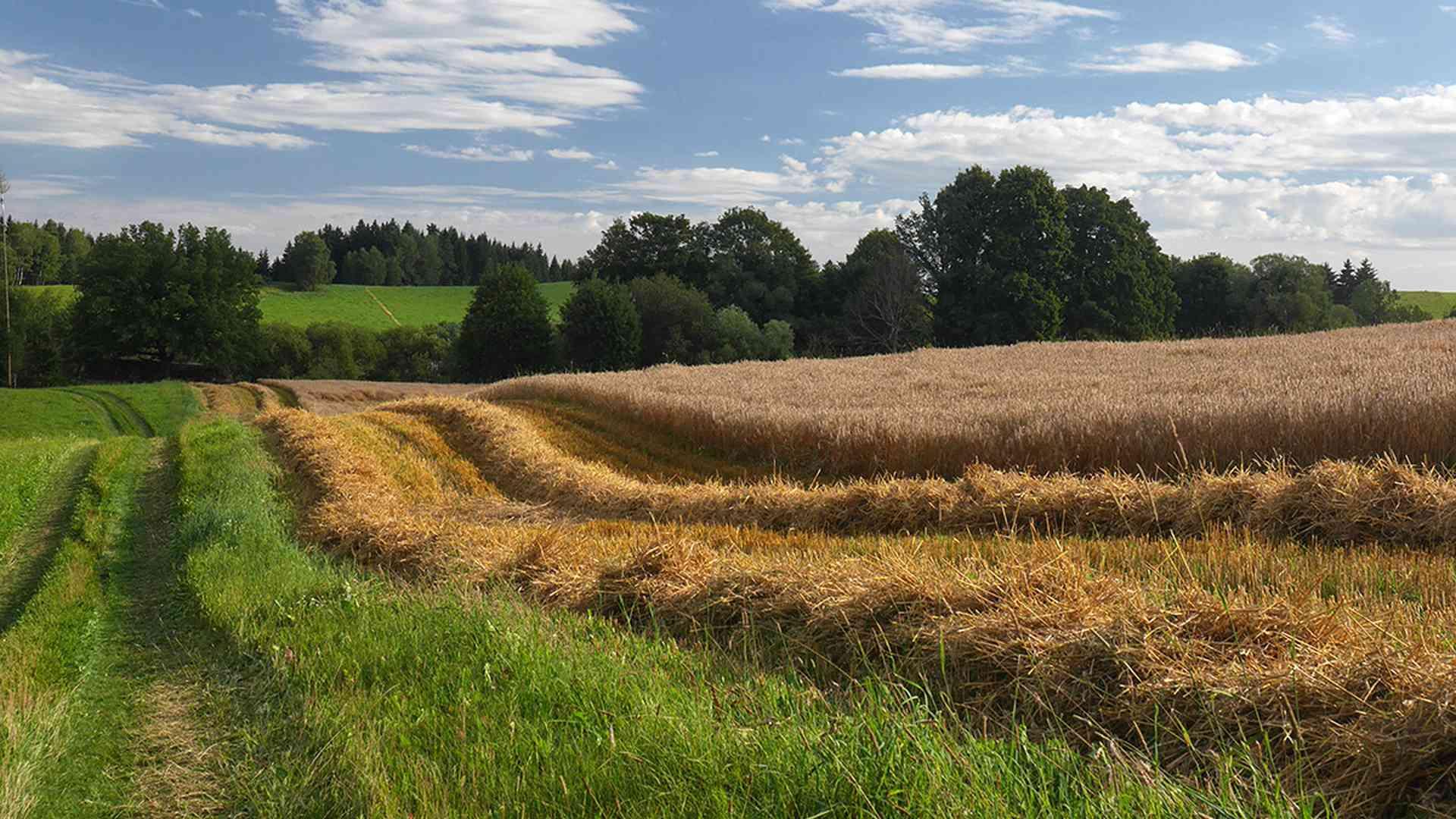 Letni krajina s poly farmy Bemagro a.s.