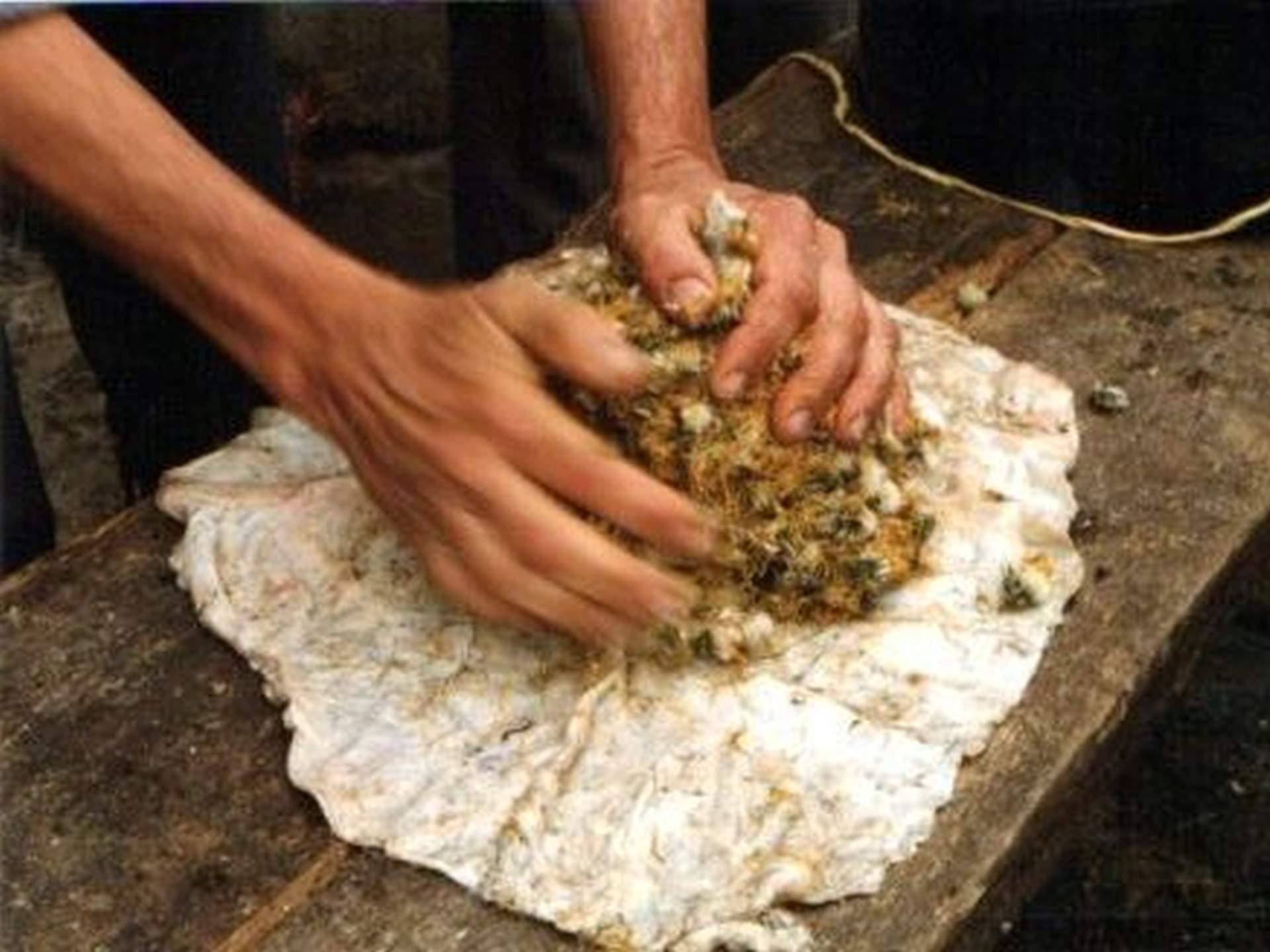 Výroba pampeliškového preparátu