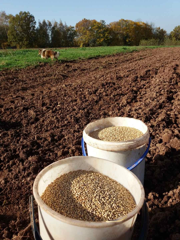 Pole před osetím pšenicí