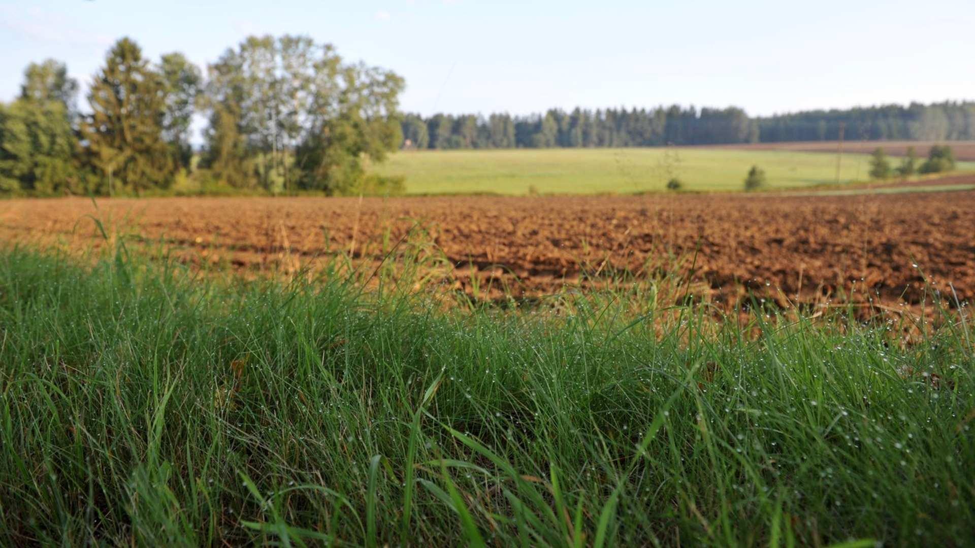 Biodynamicky ošetřované pole (foto Bemagro a.s)